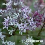 David E – Fragments (2017) 320 kbps (transcode)
