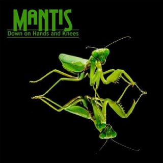 Mantis - Down On Hands And Knees (2017) 320 kbps