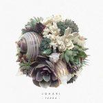 Johari – Terra (2017) 320 kbps