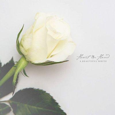 2014 - A Beautiful White